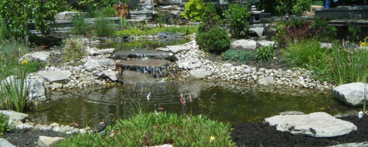 Petite mare avec rochers et végétation
